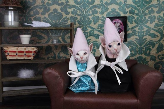 Image result for sphynx cats in spring clothes